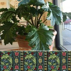 Have nothing in your house that you do not know to be useful, or believe to be beautiful. - William Morris. Did you know that in 1874 the Acanthus plant design by William Morris was one of his most instantly recognisable designs and marks the period in