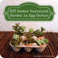 DIY Project: Succulent Garden in Egg Carton