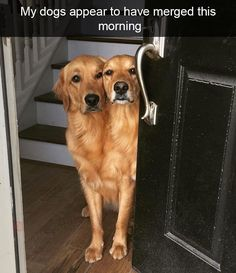 my dogs appear to have merged this morning,