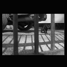 https://flic.kr/p/tJi2V4 | Cat June 2014 #cat #smallcats #blackandwhitephotography