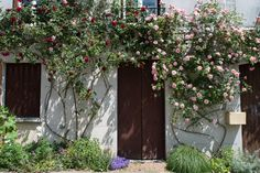 roses everywhere in May in Chedigny, France