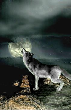 Wolf Images, Whale, Celestial, Animals, Outdoor, Wolves, Fotografia, Drawings, Outdoors