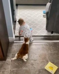 Cute Funny Baby Videos, Funny Cute Cats, Funny Animal Jokes, Cute Baby Cats, Cute Funny Babies, Cute Animal Videos, Cute Little Animals, Cute Cats And Kittens, Funny Animal Videos