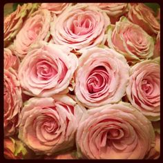 """""""Roses done right""""    Instagram"""