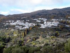 Mecina Bombaron (Alpujarra Granada) This area of the Alpujarras is particularly delightful located as it is on the wooded slopes of th. Granada Andalucia, Granada Spain, Nevada National Parks, Sierra Nevada, Types Of Plants, The Locals, City Photo, World, Water
