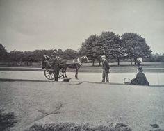 Jaunting car PhoenixPark Dublin 1895 Horse Drawn, Dublin, Ireland, Horses, Car, Automobile, Irish, Horse, Autos