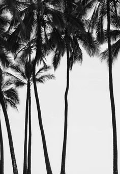 Palms are even pretty in black and white