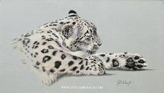 PORTRAITS OF THE BIG CATS 24