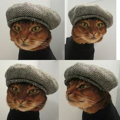 This pseudo-intellectual cat. | The 24 Most Pretentious Things Ever