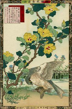 Bairei Kōno 幸野楳嶺 http://en.wikipedia.org/wiki/K%C5%8Dno_Bairei
