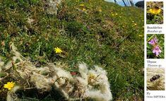 The Crete & Cumbria Nature Blog: Fell Walking For Wimps 1 - Slate Fell