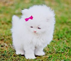 Oh my word! So adorable and fluffy!