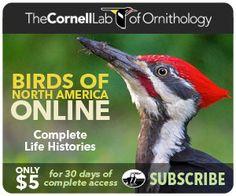 Birds of North America Online
