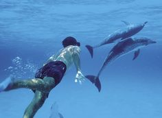 Bucket List Item #36 Swimming with dolphins