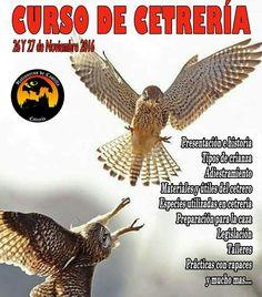 Apúntate a nuestro #curso de #cetreria y manejo de #aves #rapaces  www.halconerosdecastilla.com