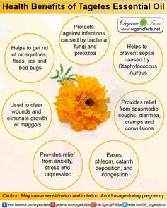 The health benefits of Tagetes Essential Oil can be attributed to its properties like anti biotic, anti microbial, anti parasitic, anti septic, anti spasmodic, disinfectant, insecticide and sedative.