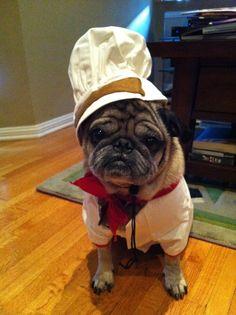 Bone Appetite, Pug.