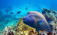 Cairns, gateway to Australia's Great Barrier Reef. Where to Go in 2015! Budget Travel