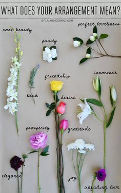 The Secret Language of Flowers Anemone- unfading love Camelia- perfect loveliness Chrysanthemum- joy; optimism Dahlia-elegance Lavender- luck Peony- prosperity Rose (pink) -admiration
