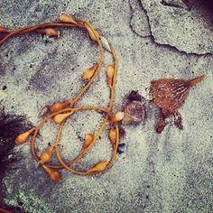 Seaweed Art