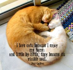 Quotes That Will Make You Want To Hug Your Pet