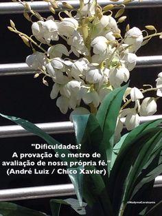"""""""Dificuldades? A provação é o metro de avaliação de nossa própria fé."""" (André Luiz / Chico Xavier)"""