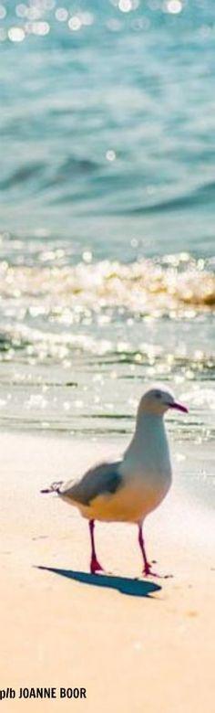 Sun Sand Surf & Sea Gull, Cape Cod