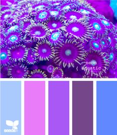 I love these colors. I don't know what kind of room this would go with. But I love them. And the flowers too.
