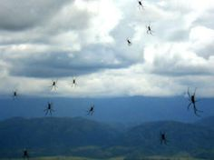 Throughout history many have witnessed showers of animals falling from the sky. This rain of spiders in Argentina was captured on film earlier this year. It's Raining, Santo Antonio Da Platina, Spider Baby, Epoch Time, San Bernardo, Falling From The Sky, Ancient Mysteries, Strange History, Snakes