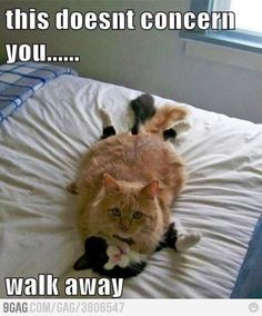 I laughed so hard, if you have cats, u know the funny things they do!!!!