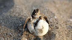 "#mamma #festadellamamma #tartalove A.A.A. cercasi una mamma ""umana"" per le tartarughe marine a rischio estinzione | Tartalove Mamma, Social Media, Turtles, Social Media Tips, Social Networks"