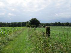 2014-06-22 Vanaf de schaapskooi in Hoge Hexel loop je naar beneden over dit mooie wandelpad