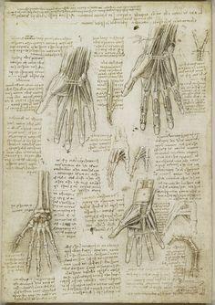 Leonardo da Vinci (Vinci 1452-Amboise 1519) - Recto: The bones, muscles and tendons of the hand. Verso: The bones of the hand