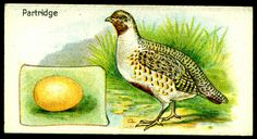 """Gossage Soap  """"British Birds and Their Eggs"""" (series of 48 issued in 1924) #7 Partridge"""