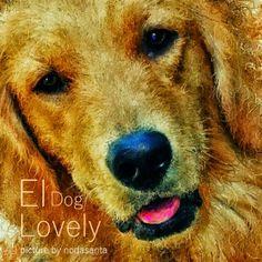 PCペイントで絵を描きました! Art picture by Seizi.N:  いのかしら動物病院のエイちゃんの絵を描きました、先生の飼っているゴールデンのエイちゃん、可愛いでしょう臆病でおとなしいワンちゃん、動物病院の看板犬です。  Eva Cassidy - Autumn Leaves http://youtu.be/XSXYu-3r1S8