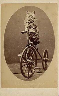 "A cat sitting on a tricycle, a carte from 'The Brighton Cats' series, photographed by Harry Pointer at his Bloomsbury Place studio in Brighton. The photograph carries the greeting ""A Happy New Year"". (Two of my fav things: cats and bikes!!)"