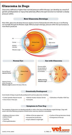 An In-Depth Look at Glaucoma in Dogs | http://VetDepot.com