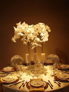 Orchids in evening event decor