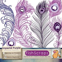 Purple Peacock Feather Clip Art - Feather Graphics by FishScraps, $5.75