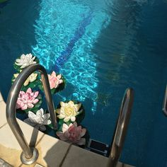 Iwatobi swimclub, water, pool, flowers