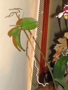 network.hu Orchids, Plants, Lilies, Planters, Plant, Planting, Orchid