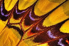 Butterfly Wing 3 by redshaw.richard, via Flickr