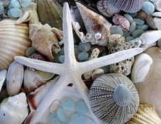 Sea Shells, Starfish, Sea Treasure Photograph  - Sea Treasure Fine Art Print by Colleen Kammerer