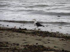 En esta fotografia se aprecian dos texturas diferentes, lo aspero de la arena y la suavidad del agua, ademas se puede ver una gaviota que es una especie muy común en las zonas costeras