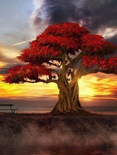 #TREE#