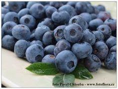 Pavel Chlouba: Výsadba, pěstování a hnojení kanadských borůvek
