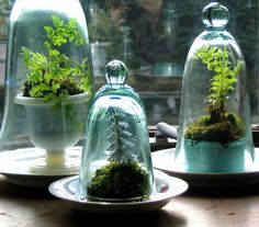 Cool Idea for House Plants.