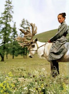 Young girl riding reindeer in Mongolia.