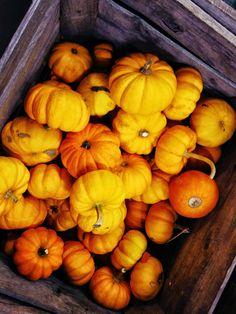 Fragrant Vanilla Cake: Raw Savory Thanksgiving Recipes