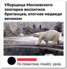 #картинки Забавные комментарии из социальных сетей. Russian Jokes, Clever Quotes, Man Humor, Polar Bear, My Books, Laughter, Dog Cat, Funny Pictures, Funny Memes